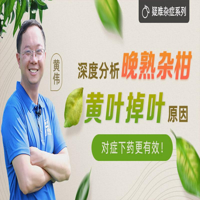 【天天学农】耙耙柑必修课-晚熟杂柑黄叶掉叶现象分析 1*1套*1套