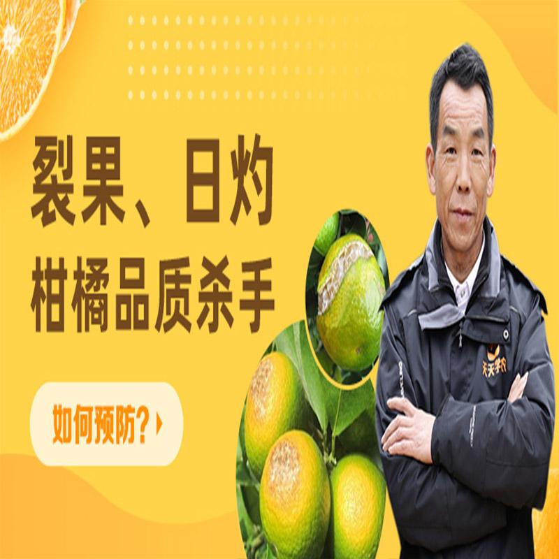 【天天学农】柑橘品质提升必修课 1*1套*1套
