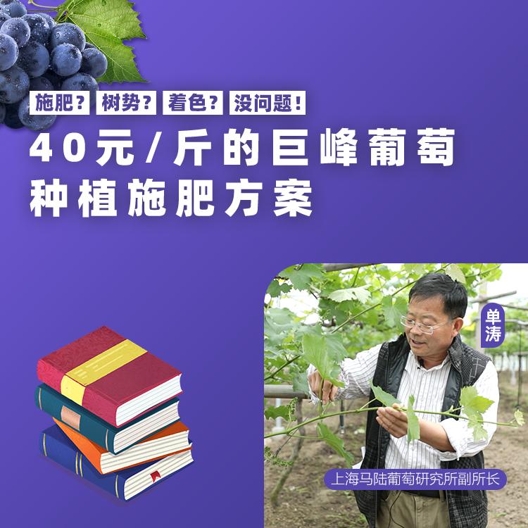 【天天学农】40/斤的巨峰葡萄施肥方案 1*1套*1套