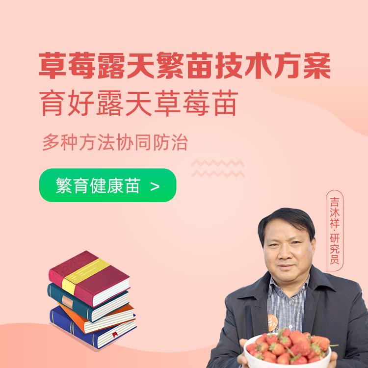 【天天学农】草莓露天繁苗技术方案 1*1套*1套