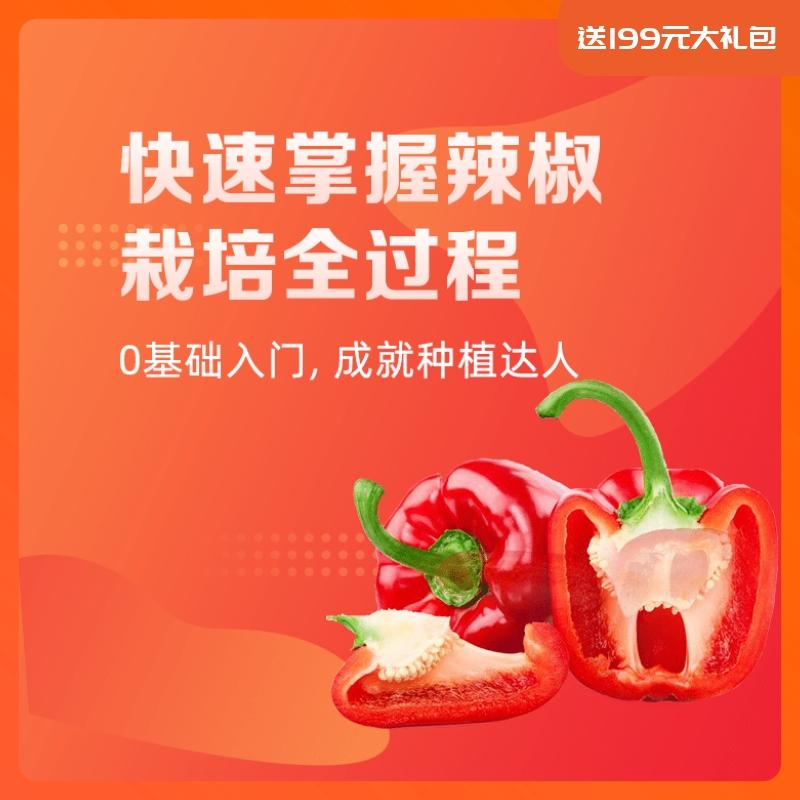 【天天学农】辣椒栽培管理方案 1*1套*1套