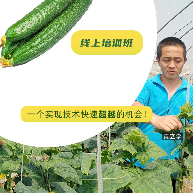 【天天学农】黄瓜种植技术宝典 1*1套*1套