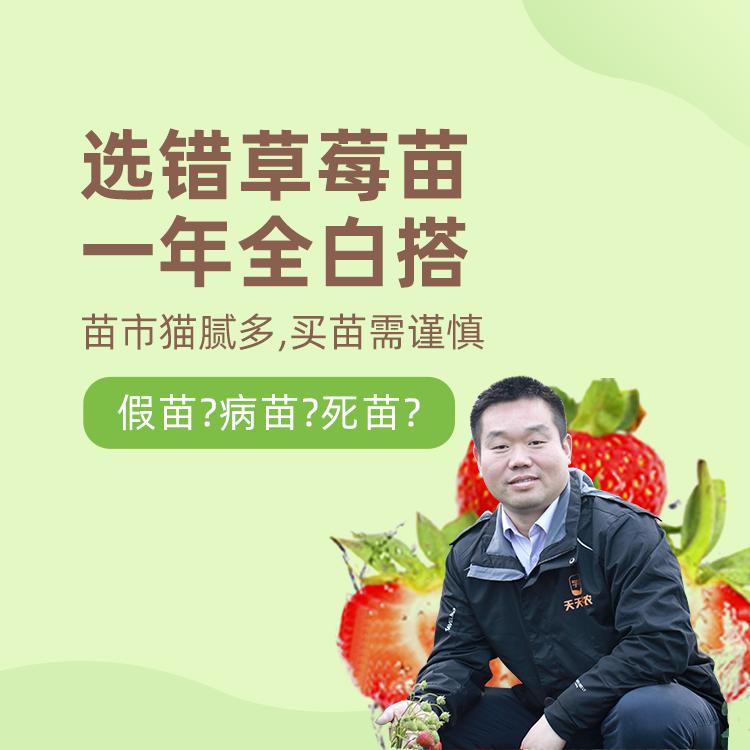 【天天学农】草莓选苗指南 1*1套*1套