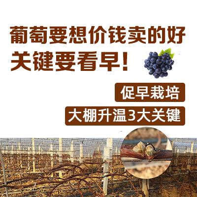 葡萄促早栽培秘籍 1*1套*1套
