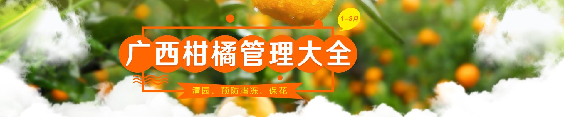 【1月】广西柑橘管理大全-PC轮播