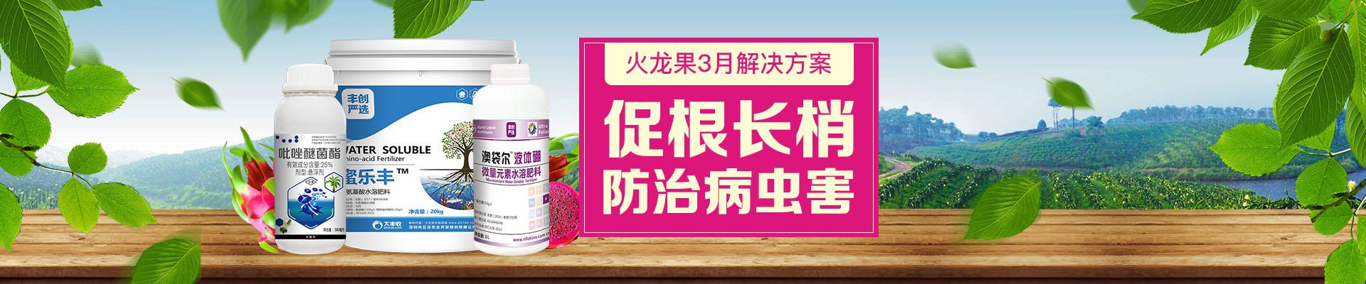 【2月】火龙果卖场