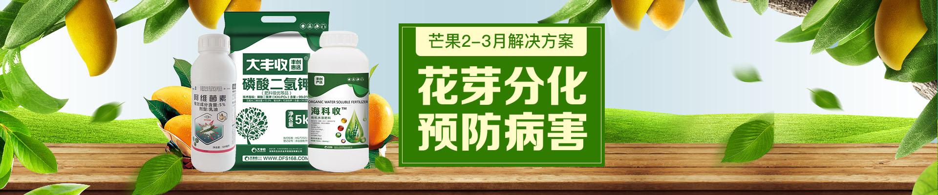 【2月】芒果卖场
