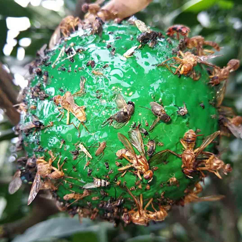依科曼新式球型实蝇诱捕器 1个*1个