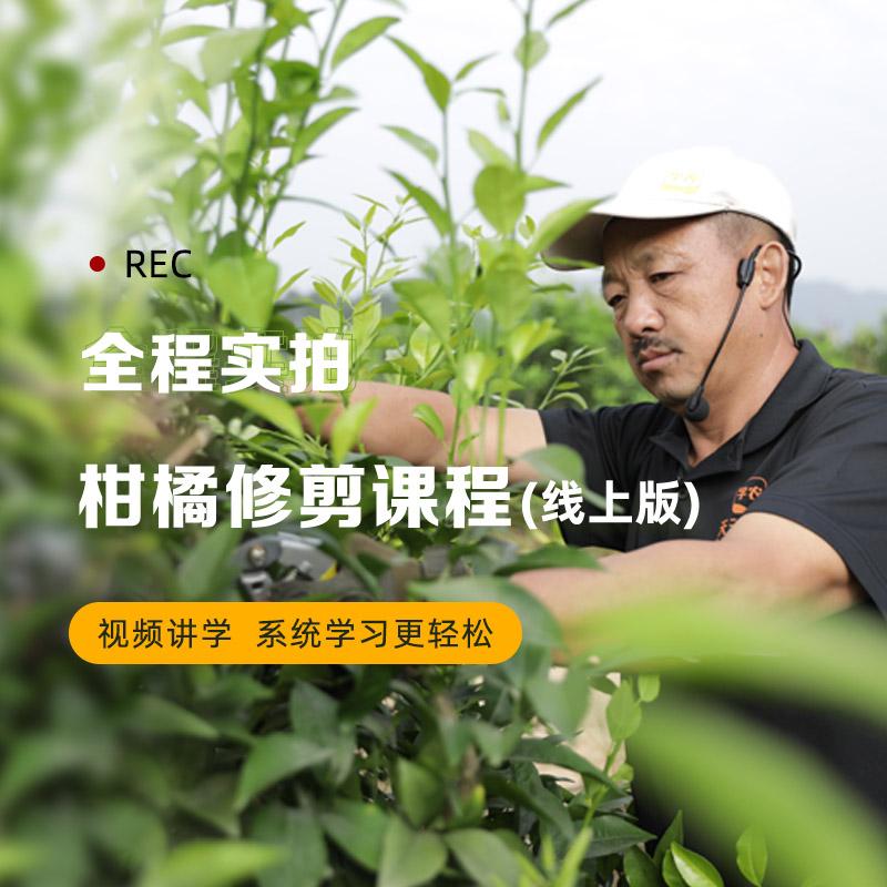 吴老三柑橘修剪班【线上学习版】 1Pcs